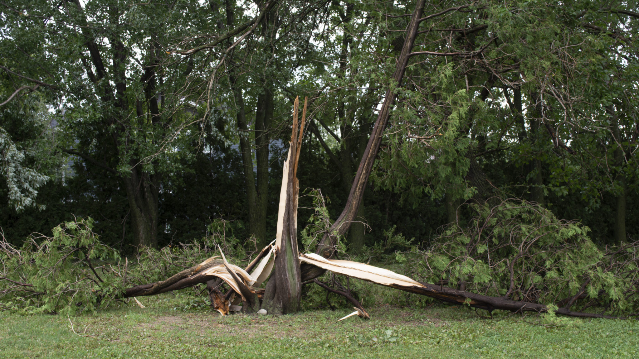 Downed tree from storm