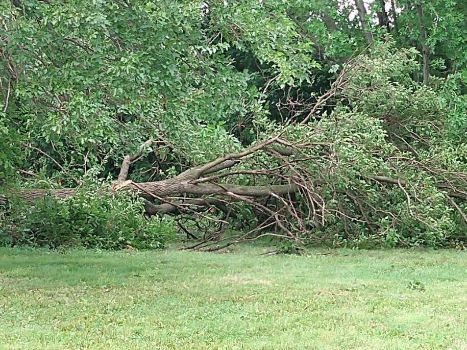 Tree down in North Liberty