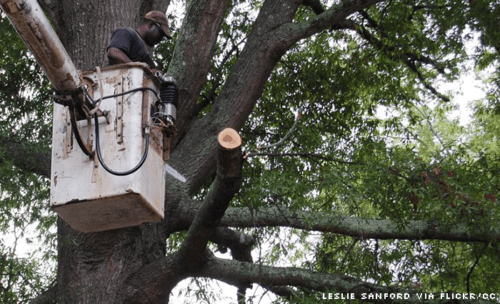 A worker in a bucket truck cuts tree limbs by Leslie Sanford.